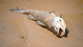 Νεκρά ψάρια απόθεμα βίντεο