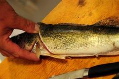 Νεκρά ψάρια Στοκ Φωτογραφία