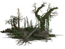 Νεκρές δέντρα και εγκαταστάσεις στοκ εικόνα με δικαίωμα ελεύθερης χρήσης