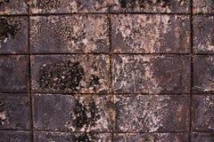 Νεκρές εγκαταστάσεις στον τοίχο Στοκ φωτογραφίες με δικαίωμα ελεύθερης χρήσης