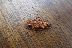 Νεκρές κατσαρίδες σε ξύλινο Στοκ Εικόνες