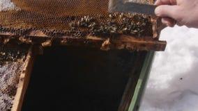 Νεκρές μέλισσες στην κυψέλη απόθεμα βίντεο