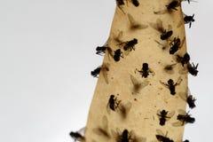Νεκρές μύγες που κολλιούνται σε μια κολλώδη παγίδα μυγών Στοκ Εικόνες