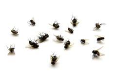 Νεκρές μύγες Στοκ εικόνα με δικαίωμα ελεύθερης χρήσης