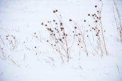Νεκρές χλόες στο χιόνι, midwest κατά τη διάρκεια του χειμώνα στοκ φωτογραφία