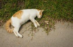 Νεκρή γάτα στην οδική πλευρά Στοκ φωτογραφία με δικαίωμα ελεύθερης χρήσης