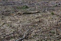 Νεκρή γη Στοκ εικόνες με δικαίωμα ελεύθερης χρήσης