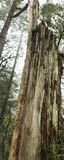 Νεκρή κινηματογράφηση σε πρώτο πλάνο δέντρων Στοκ Εικόνες