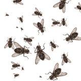 νεκρή μύγα Στοκ Εικόνα