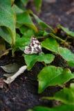 Νεκρή πεταλούδα Στοκ φωτογραφίες με δικαίωμα ελεύθερης χρήσης