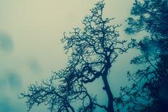 Νεκρή σκιαγραφία δέντρων με το misty υπόβαθρο σε Matheran Στοκ φωτογραφίες με δικαίωμα ελεύθερης χρήσης