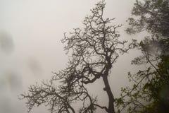 Νεκρή σκιαγραφία δέντρων με το misty υπόβαθρο σε Matheran Στοκ Φωτογραφία