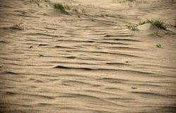 Νεκροί αμμόλοφοι σε Neringa, Λιθουανία Στοκ Εικόνες