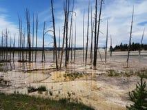 Νεκροί σκελετοί δέντρων τη χρωματισμένη υδροθερμική άνοιξη με τις άσπρες κάλτσες στη βάση Στοκ Φωτογραφία