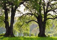 Νεκροταφείο επαρχίας Στοκ φωτογραφία με δικαίωμα ελεύθερης χρήσης