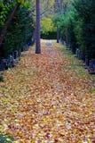 Νεκροταφείο στο φθινόπωρο στοκ εικόνες