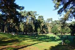 Νεκροταφείο Wymondham, Norfolk, Αγγλία στοκ εικόνες με δικαίωμα ελεύθερης χρήσης