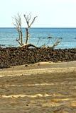 νεκρός δέντρων ουρανός νησιών άμμου φυκιών ινδικός Στοκ Φωτογραφία