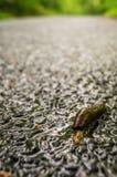 Νεκρός γυμνοσάλιαγκας στο δρόμο Στοκ εικόνες με δικαίωμα ελεύθερης χρήσης