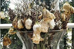 Νεκρός και ξηρός αυξήθηκε λουλούδια Στοκ Φωτογραφίες