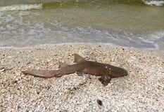 Νεκρός καρχαρίας στην παραλία Myers οχυρών στοκ φωτογραφία με δικαίωμα ελεύθερης χρήσης