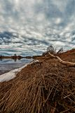 Νεκρός κλάδος στην κάμψη ποταμών στοκ εικόνα