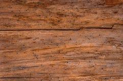 νεκρός κορμός δέντρων στοκ φωτογραφία με δικαίωμα ελεύθερης χρήσης