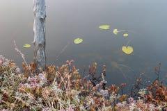 Νεκρός κορμός δέντρων και παγετός πρωινού στοκ φωτογραφίες με δικαίωμα ελεύθερης χρήσης