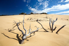 νεκρός κορμός δέντρων στοκ εικόνες