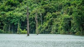 Νεκρός κορμός ενός ξύλου στη λίμνη στοκ εικόνα με δικαίωμα ελεύθερης χρήσης
