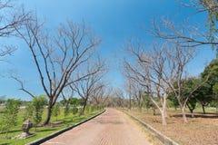 Νεκρός δρόμος δέντρων Στοκ φωτογραφία με δικαίωμα ελεύθερης χρήσης