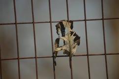 νεκρός Στοκ εικόνες με δικαίωμα ελεύθερης χρήσης