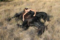 νεκρό άλογο Στοκ Εικόνες