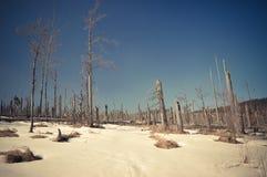 Νεκρό δάσος βουνών Sumava Στοκ εικόνες με δικαίωμα ελεύθερης χρήσης