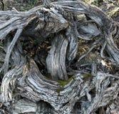 νεκρό δάσος Στοκ Εικόνες