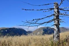 Νεκρό δέντρο βουνών Στοκ φωτογραφία με δικαίωμα ελεύθερης χρήσης
