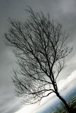 Νεκρό δέντρο θλίψης Στοκ φωτογραφία με δικαίωμα ελεύθερης χρήσης