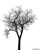 Νεκρό δέντρο διανυσματική απεικόνιση φύλλων που σκιαγραφείται χωρίς Στοκ Φωτογραφία