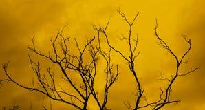 νεκρό δέντρο με έναν υπερφυσικό τρομακτικό κόκκινο ουρανό Στοκ φωτογραφία με δικαίωμα ελεύθερης χρήσης