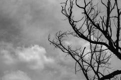 Νεκρό δέντρο με το νεφελώδη ουρανό στοκ εικόνες με δικαίωμα ελεύθερης χρήσης