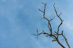 Νεκρό δέντρο μπλε ουρανού Στοκ εικόνες με δικαίωμα ελεύθερης χρήσης