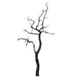 Νεκρό δέντρο που απομονώνεται στην άσπρη ανασκόπηση Στοκ Εικόνες