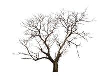 Νεκρό δέντρο που απομονώνεται στην άσπρη ανασκόπηση Στοκ φωτογραφία με δικαίωμα ελεύθερης χρήσης