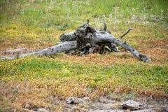 Νεκρό δέντρο στα λουλούδια Στοκ Εικόνες