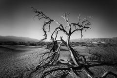 Νεκρό δέντρο στην κοιλάδα Deth Στοκ εικόνες με δικαίωμα ελεύθερης χρήσης