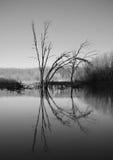 Νεκρό δέντρο στη μέση της λίμνης. Μονοχρωματικός στοκ φωτογραφία με δικαίωμα ελεύθερης χρήσης
