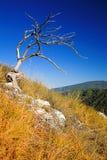 Νεκρό δέντρο στο βουνό στοκ φωτογραφία με δικαίωμα ελεύθερης χρήσης
