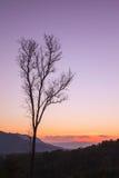 Νεκρό δέντρο στο υπόβαθρο λυκόφατος ηλιοβασιλέματος Στοκ Εικόνες