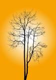 Νεκρό δέντρο χωρίς φύλλα Στοκ εικόνα με δικαίωμα ελεύθερης χρήσης