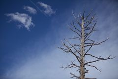 Νεκρός πυροβολισμός ηρώων δέντρων Στοκ Εικόνα